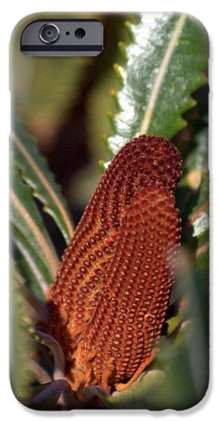 IPhone 6 Case featuring the photograph Banksia by Miroslava Jurcik