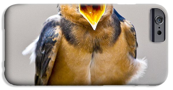 IPhone 6 Case featuring the photograph Barn Swallow by Ricky L Jones