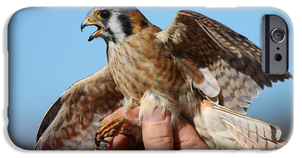 IPhone 6 Case featuring the photograph Behold The American Kestrel by Nathan Rupert