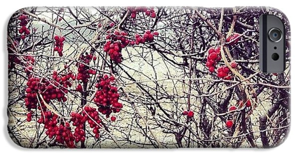 Bright iPhone 6 Case - Berries In The Hedgerow by Nic Squirrell