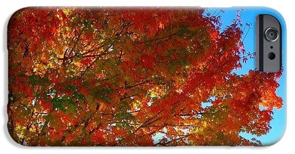 Sunny iPhone 6 Case - Blazing Orange Maple Tree by Anna Porter