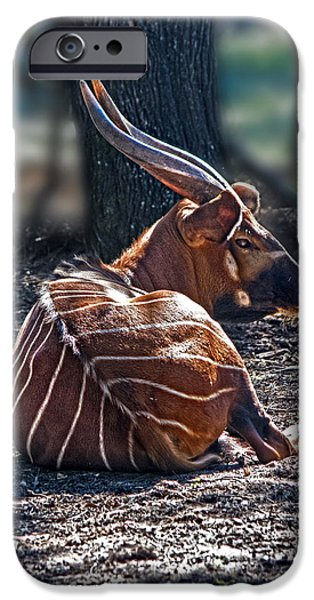 Bongo IPhone 6 Case