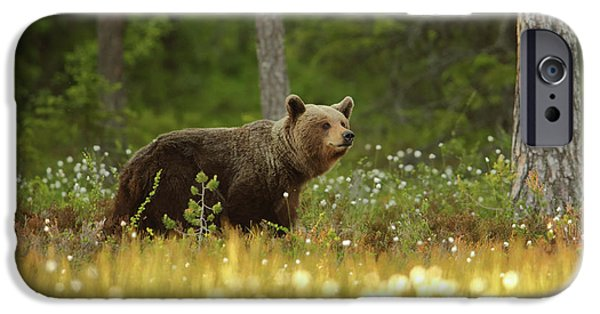 Brown iPhone 6 Case - Brown Bear by Assaf Gavra