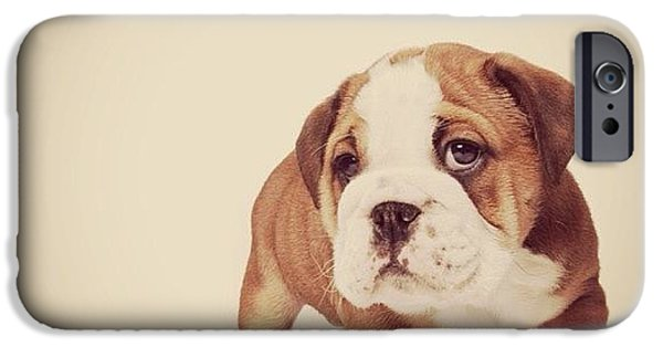 Bulldog Pup IPhone 6 Case