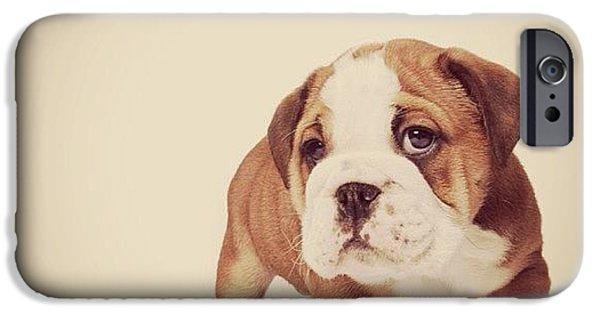 iPhone 6 Case - Bulldog Pup by Ritchie Garrod