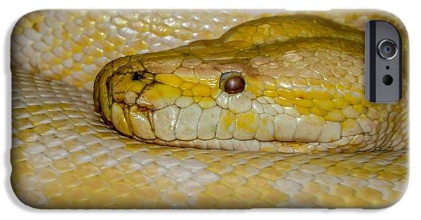 Burmese Python iPhone Cases - Burmese Python iPhone Case by Ernie Echols