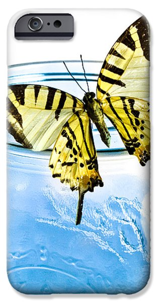 Transcendental iPhone Cases - Butterfly on a blue jar iPhone Case by Bob Orsillo