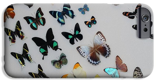 Lepidopterology iphone 11 case