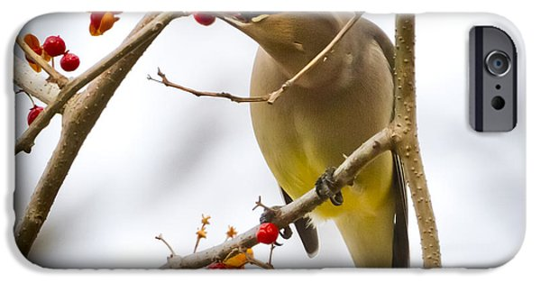 IPhone 6 Case featuring the photograph Cedar Waxwing by Ricky L Jones