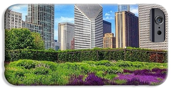 Chicago Skyline At Lurie Garden IPhone 6 Case