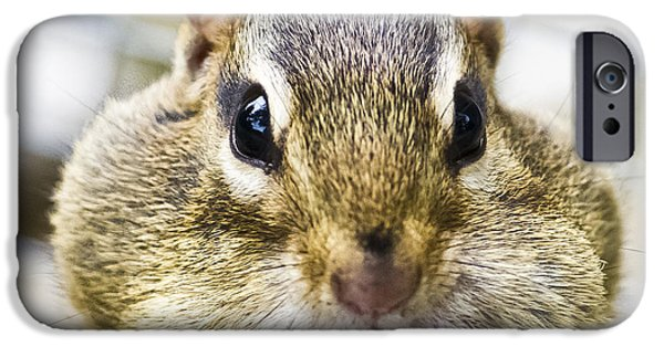 IPhone 6 Case featuring the photograph Chipmunk With It's Mouth Full Bong by Ricky L Jones
