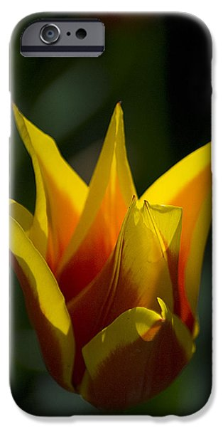 IPhone 6 Case featuring the photograph Crown Tulip by Yulia Kazansky