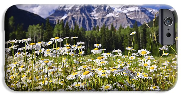 Wilderness iPhone Cases - Daisies at Mount Robson iPhone Case by Elena Elisseeva