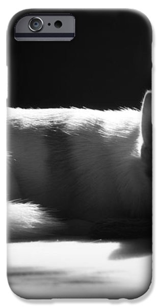 Doggy Dreamin' iPhone Case by Mandy Shupp
