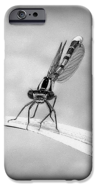 IPhone 6 Case featuring the photograph Donna The Damselfly by Karen Shackles