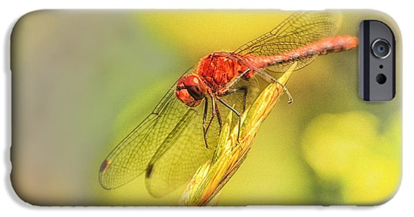 Red Dragonfly iPhone 6 Cases | Fine Art America