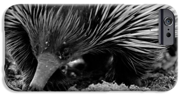 Echidna IPhone 6 Case