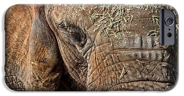 Elephant Never Forgets IPhone 6 Case by Miroslava Jurcik