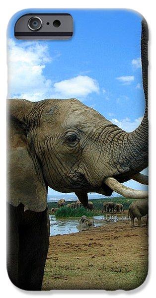 Wildlife Imagery iPhone Cases - Elephant Posing iPhone Case by Ramona Johnston