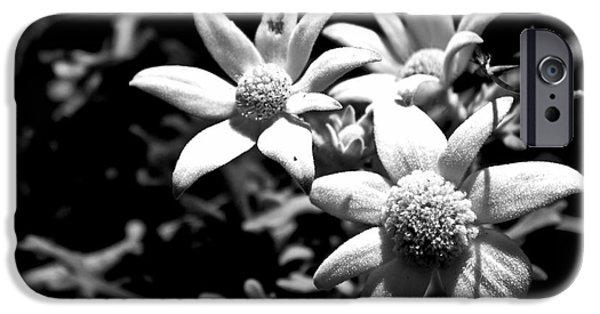 IPhone 6 Case featuring the photograph Flannel Flower by Miroslava Jurcik