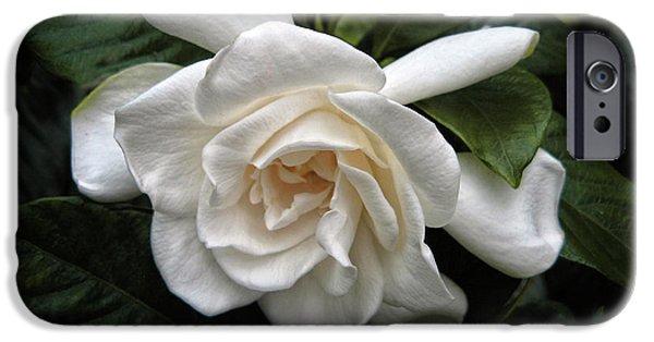 Gardenia IPhone 6 Case