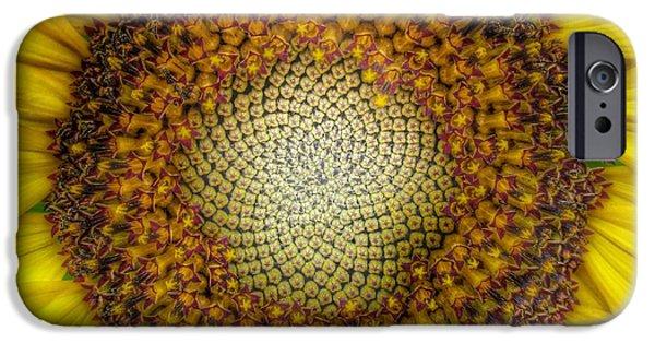 Sunflower Seeds iPhone 6 Case - Ghost Sunflower by Marianna Mills