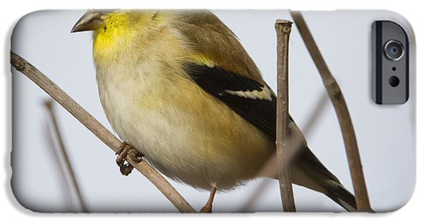 IPhone 6 Case featuring the photograph Goldfinch In It's Winter Coat by Ricky L Jones
