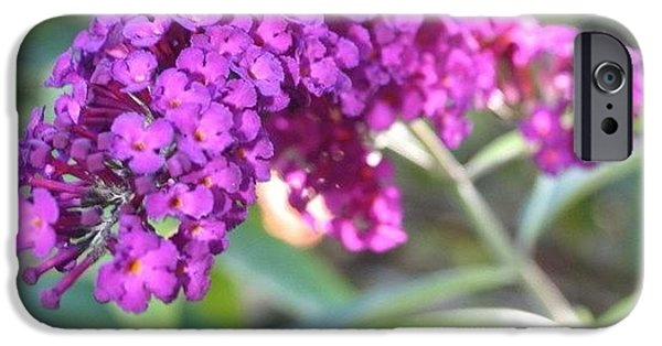 Edit iPhone 6 Case - Good Morning Purple Butterfly Bush by Anna Porter