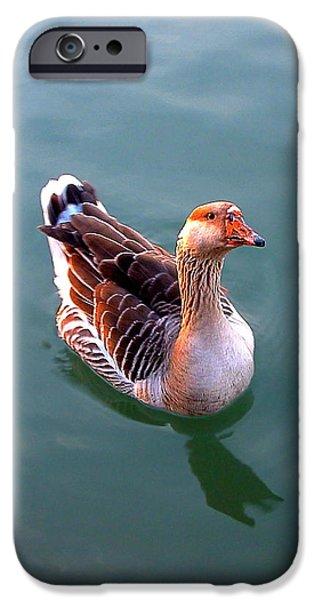 Goose IPhone 6 Case