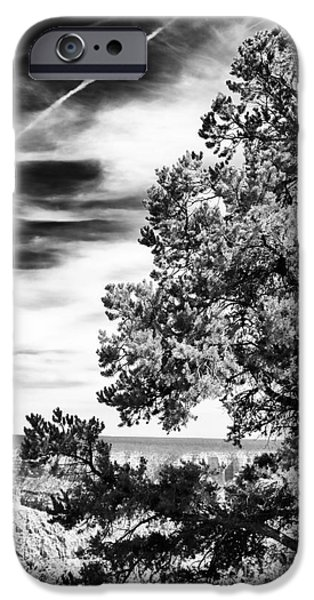 Northern Arizona iPhone Cases - Half Tree iPhone Case by John Rizzuto