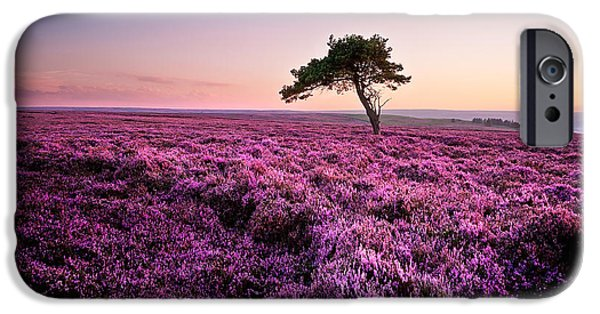 Tree iPhone 6 Case - Heather At Sunset by Janet Burdon
