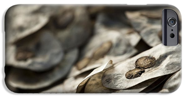 Mounds iPhone Cases - Honesty Seeds iPhone Case by Anne Gilbert