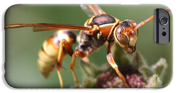 IPhone 6 Case featuring the photograph Hornet On Flower by Nathan Rupert