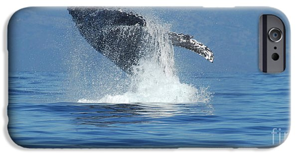 Whale iPhone Cases - Humpback Whale Breaching iPhone Case by Bob Christopher