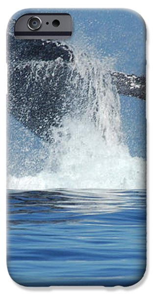 Humpback Whale Breaching iPhone Case by Bob Christopher