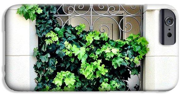 Green iPhone 6 Case - Ivy by Julie Gebhardt