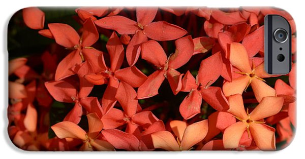 Decorative iPhone 6 Case - Ixora Red by Sanjay Ghorpade
