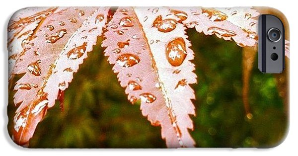 Japanese Maple Leaves IPhone 6 Case