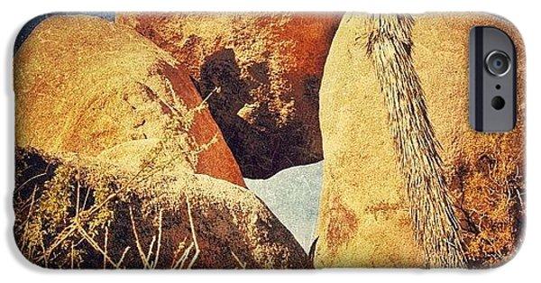 Sunny iPhone 6 Case - Joshua Tree Np by Jill Battaglia