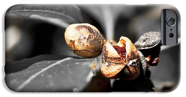 IPhone 6 Case featuring the photograph Knew Seeds Of Complentation by Miroslava Jurcik