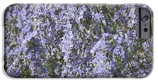 Summer iPhone 6 Case - #lavender by Georgia Fowler