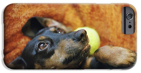 Lazy Dog iPhone Cases - Lazy  Daschund iPhone Case by Angel  Tarantella