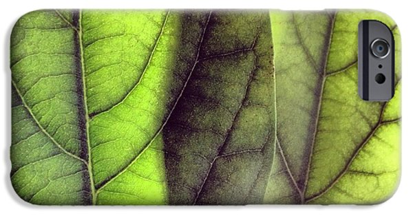 Leaf Abstract IPhone 6 Case by Christy Beckwith