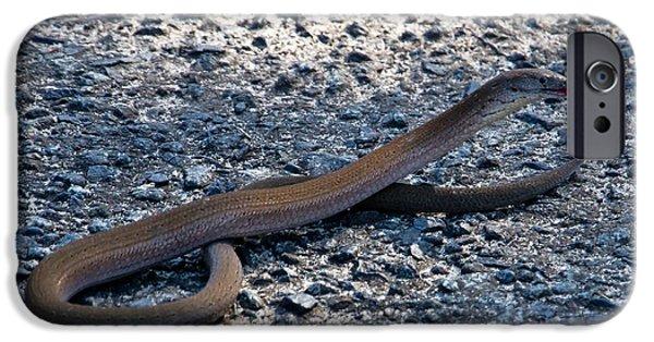 IPhone 6 Case featuring the photograph Legless Lizard Or A Snake ? by Miroslava Jurcik