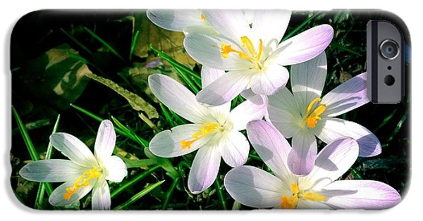 Bright iPhone 6 Case - Lovely Flowers In Spring by Matthias Hauser