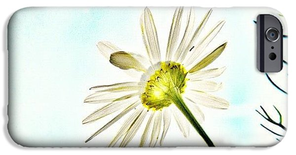 Sky iPhone 6 Case - #mgmarts #daisy #flower #morning by Marianna Mills