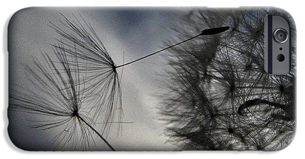 Sky iPhone 6 Case - #mgmarts #dandelion #makeawish #wish by Marianna Mills
