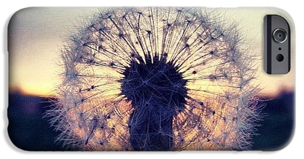 Sky iPhone 6 Case - #mgmarts #dandelion #sunset #simple by Marianna Mills