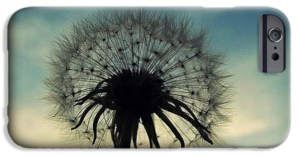 Sky iPhone 6 Case - #mgmarts #dandelion #weed #sunset #sun by Marianna Mills