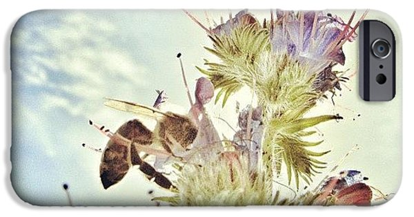 Sky iPhone 6 Case - #mgmarts #flower #spring #summer #bee by Marianna Mills